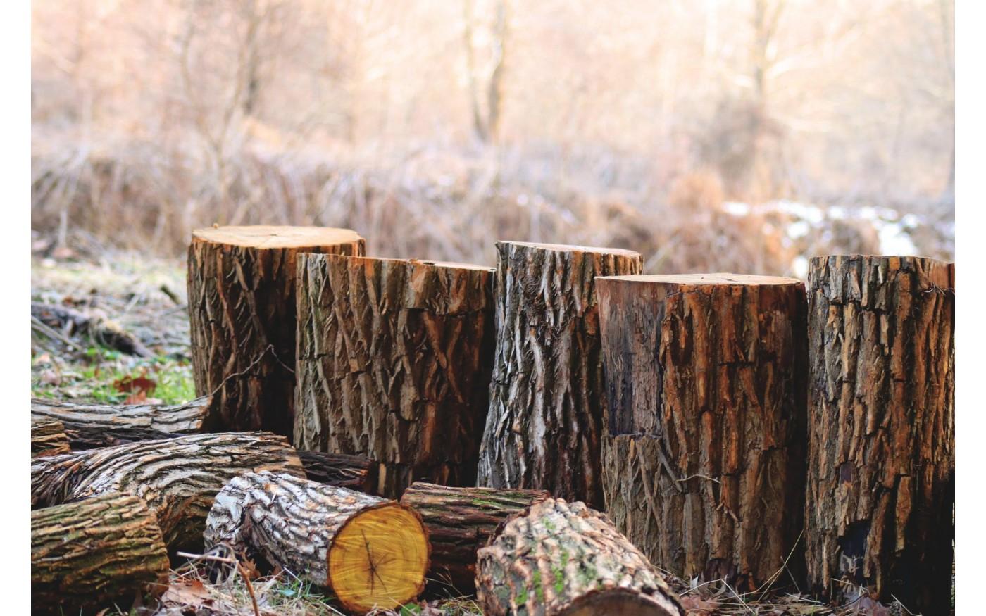Choosing Wood For Smoking Meat