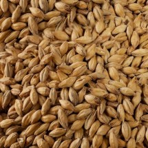 Pale Ale Malt - Whole