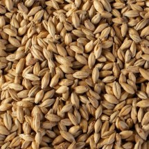 Pilsner Malt - Whole