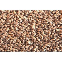 Wheat Malt - Whole