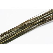 Bison Grass - Hierochloe Odorata - Zobrowka